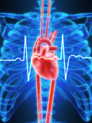 Steroid abuse can lead to heart problems